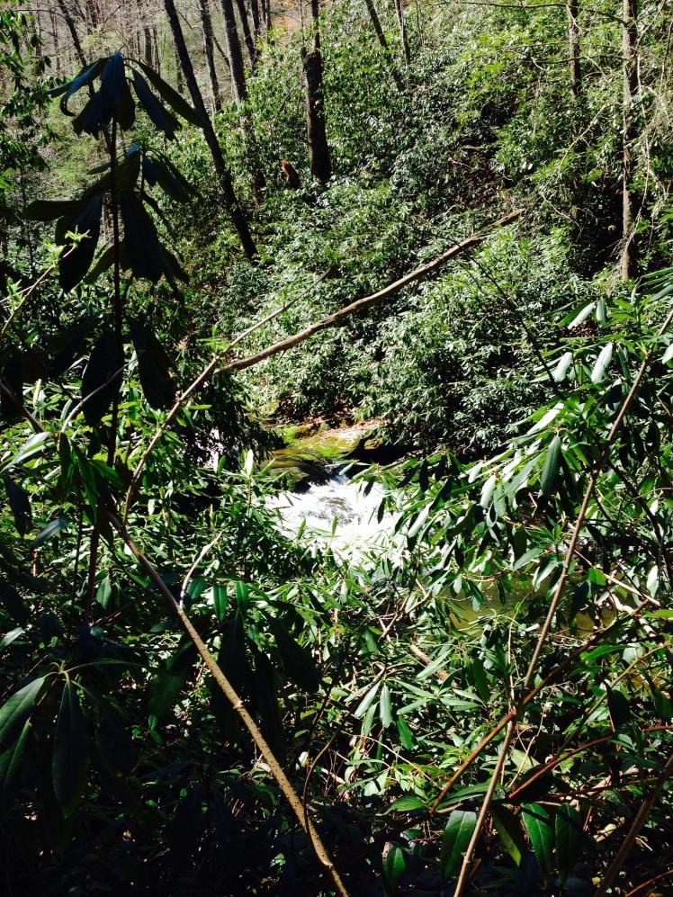 Ellicott Rock Wilderness