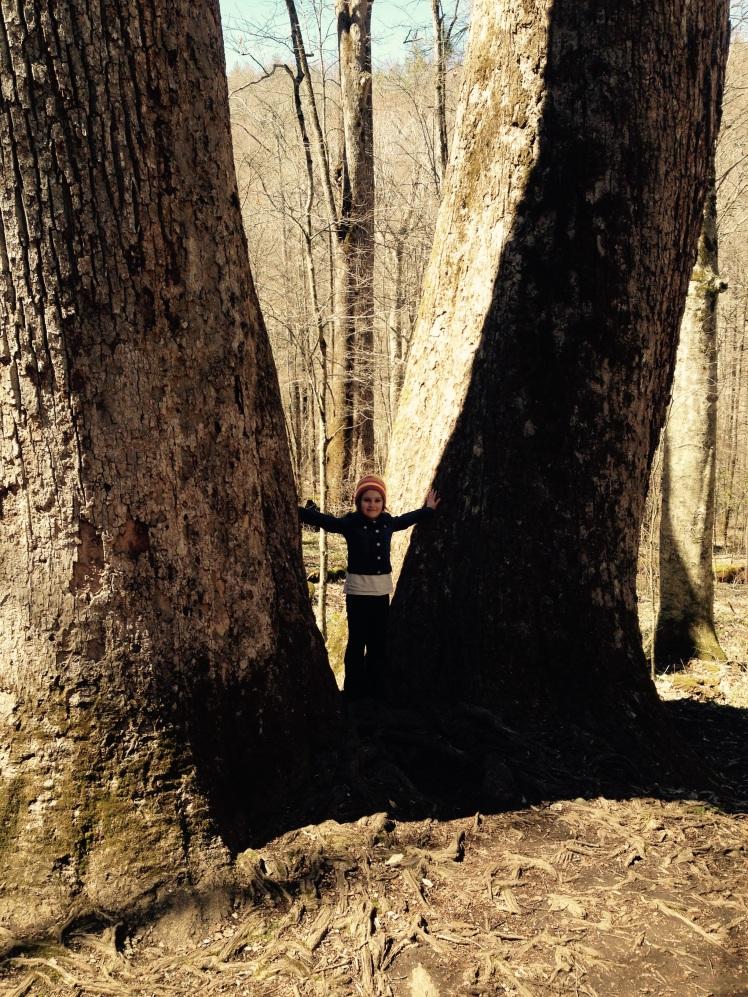Joyce Kilmer Memorial Forest