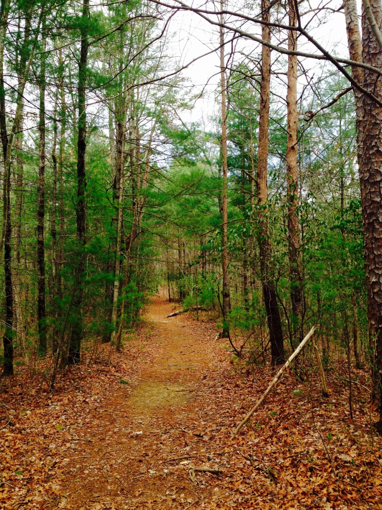 Gorges State Park - Foothills Trail