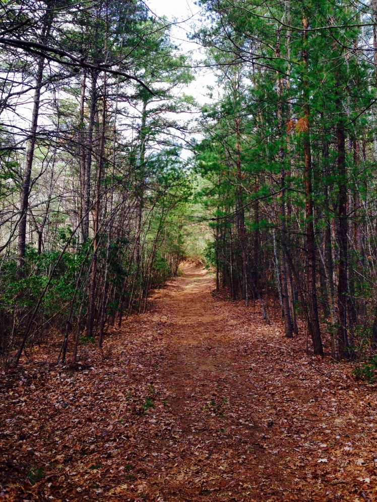 Gorges State Park - Canebrake Trail