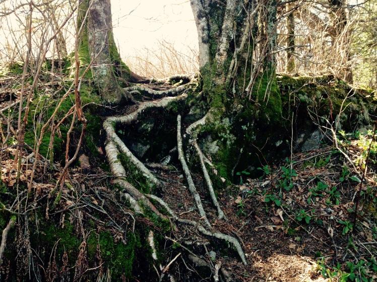Waterrock Knob
