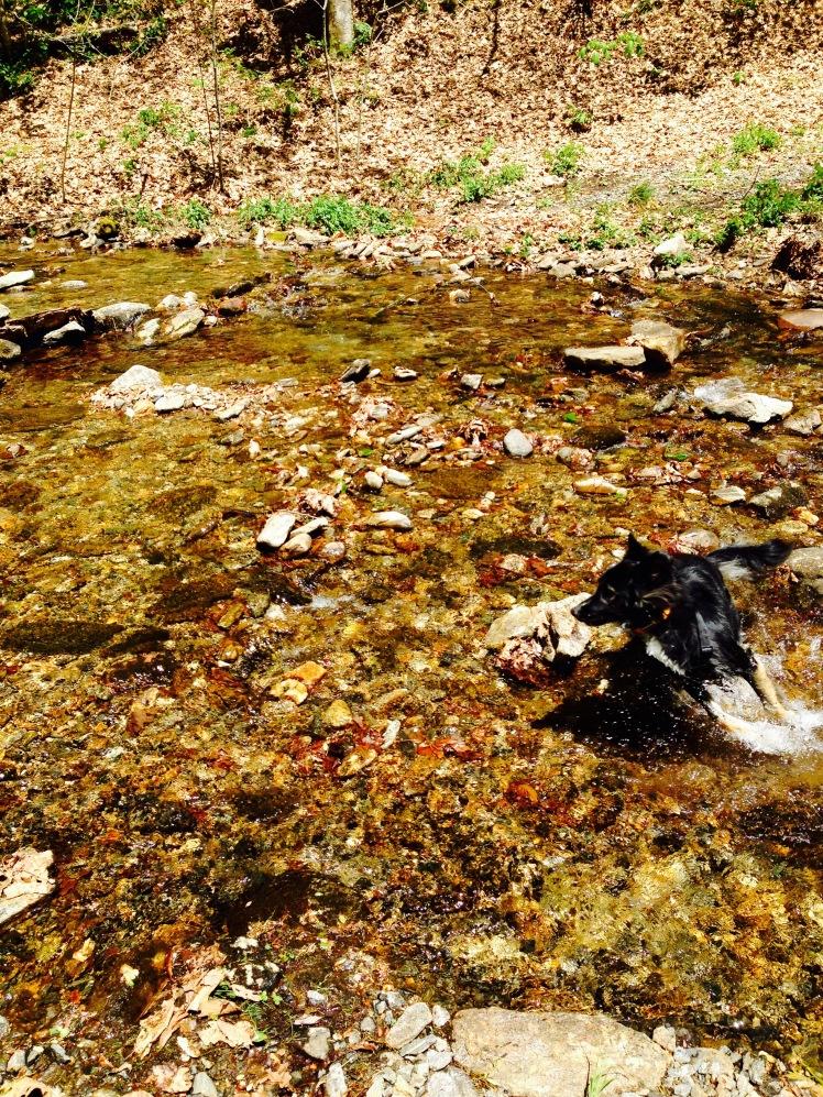 Kiesee Creek