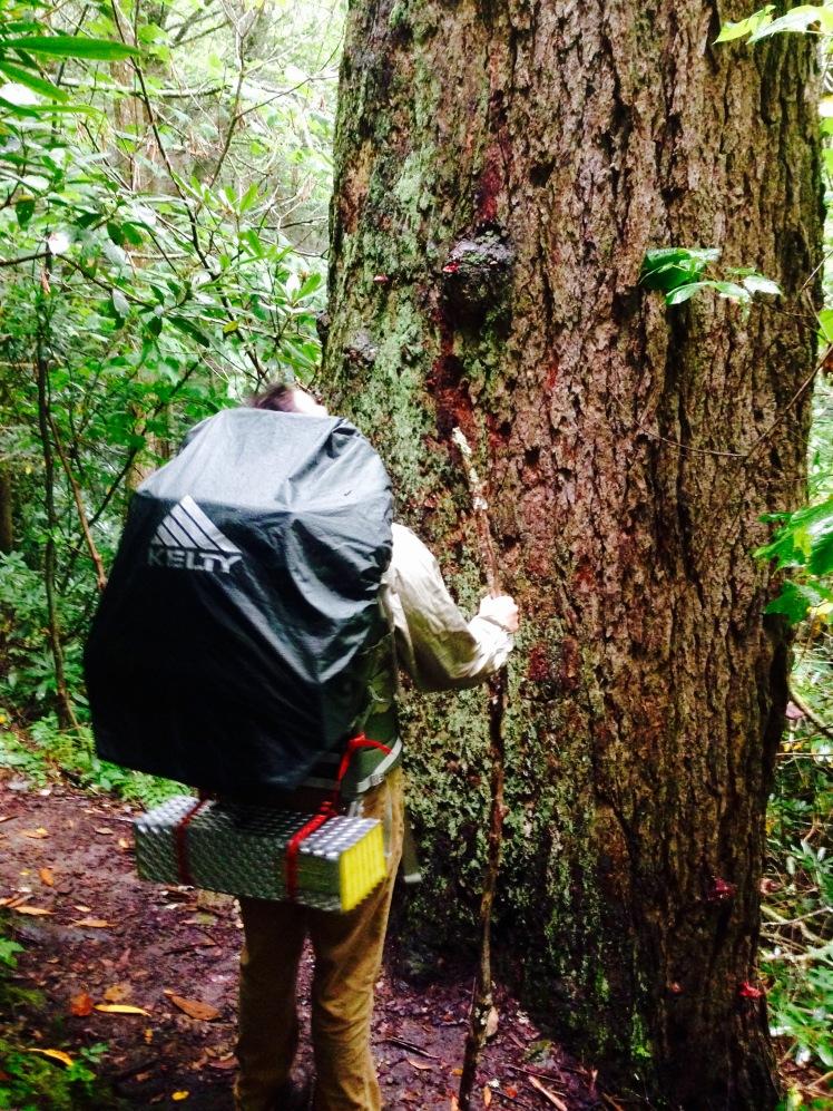 Appalachian Trail - Frank