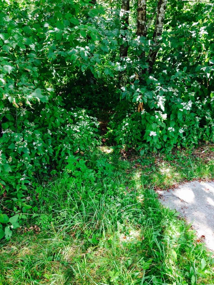 beginning of the bush whack