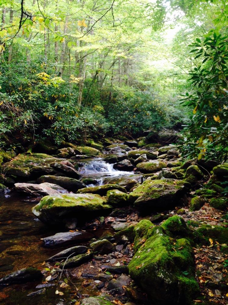 Middle Prong Wilderness - Buckeye Creek