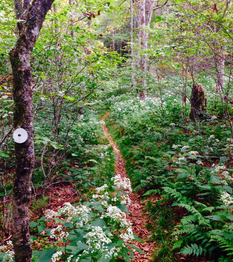 Middle Prong Wilderness - MST