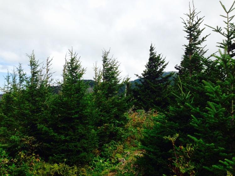 Old Mitchell Trail