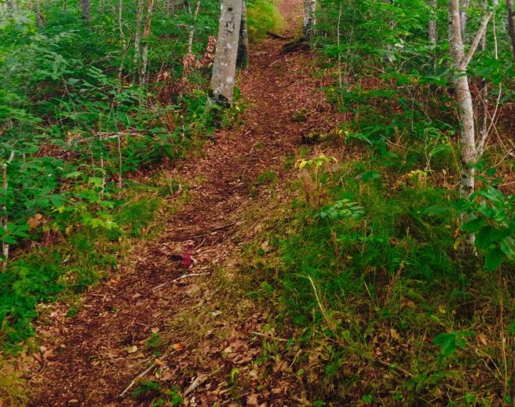Snowball Trail