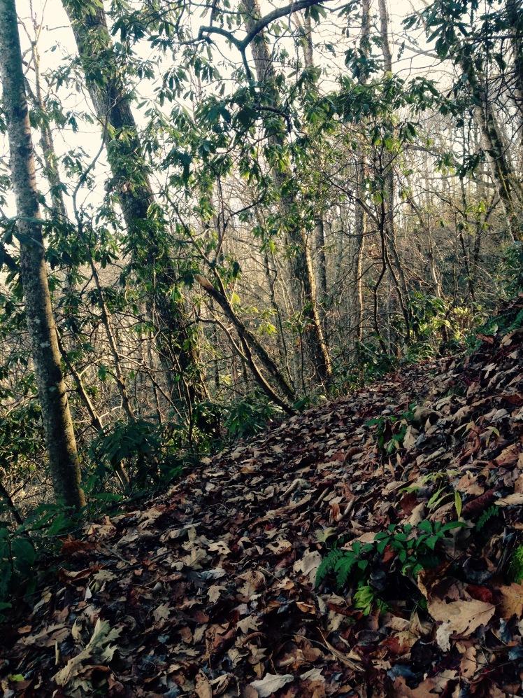 Kanati Fork Trail