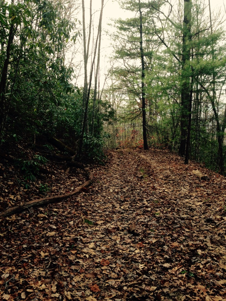 Thomas Divide Trail