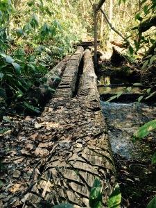 Caney Bottom Trail