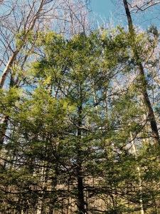 Cove Creek Trail