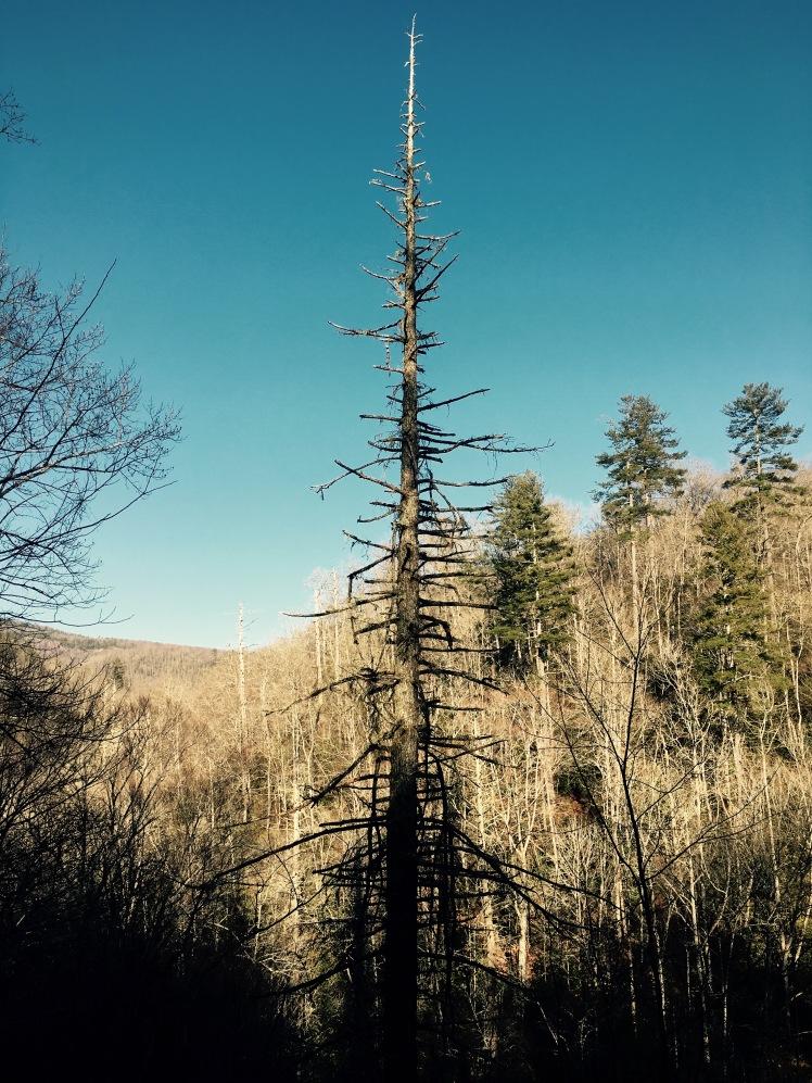 Davidson River Trail