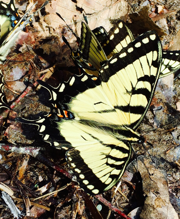 Avery Creek Trail - butterfly