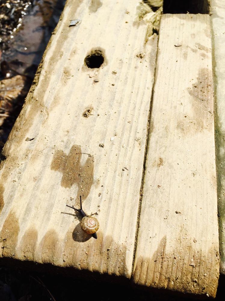 Avery Creek Trail - snail