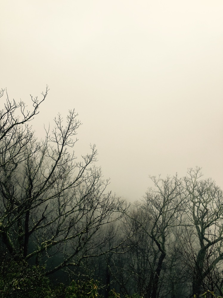 Bennett Gap Trail - bare trees in fog
