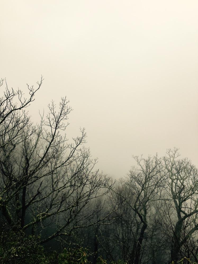 Bennett Gap Trail - bare trees in fog