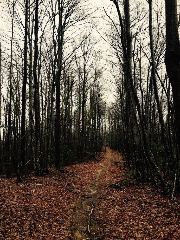 Bennett Gap Trail - trail on ridge