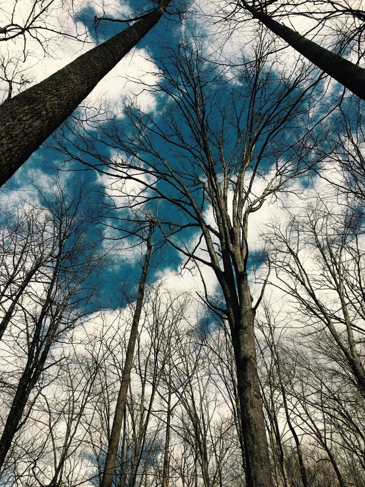 Buckhorn Gap Trail - sky