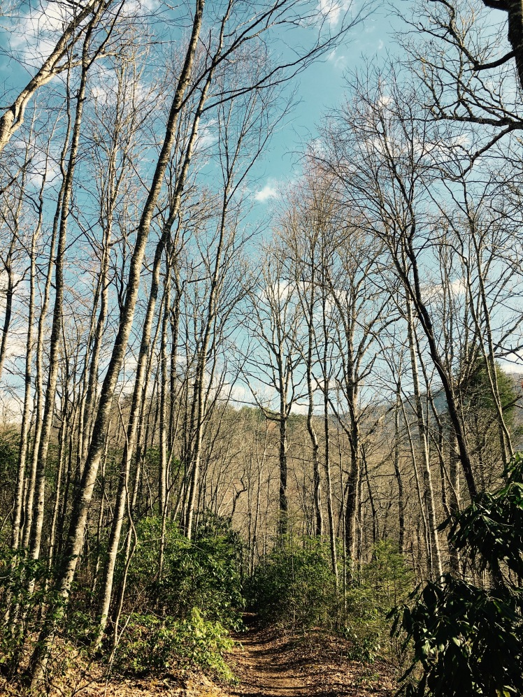 Buckhorn Gap Trail - trees and sky