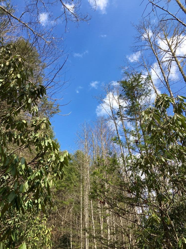 Grassy Road Trail - sky