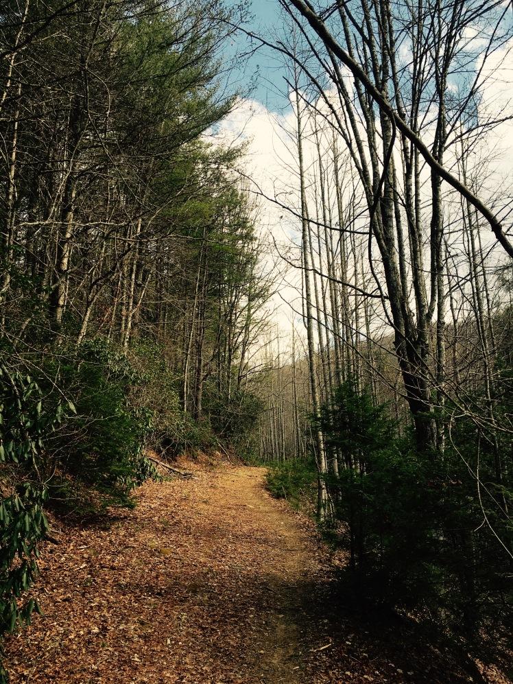 Grassy Road Trail - trees