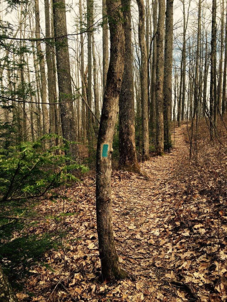 North Face Trail - blue blaze