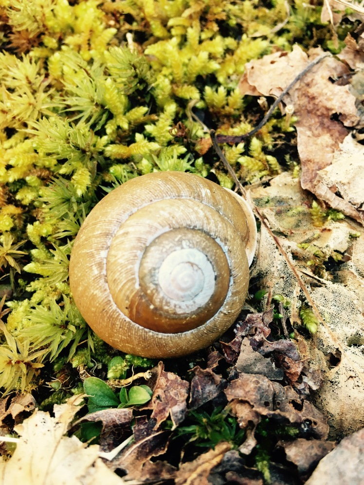 North Slope Connector Trail - snail