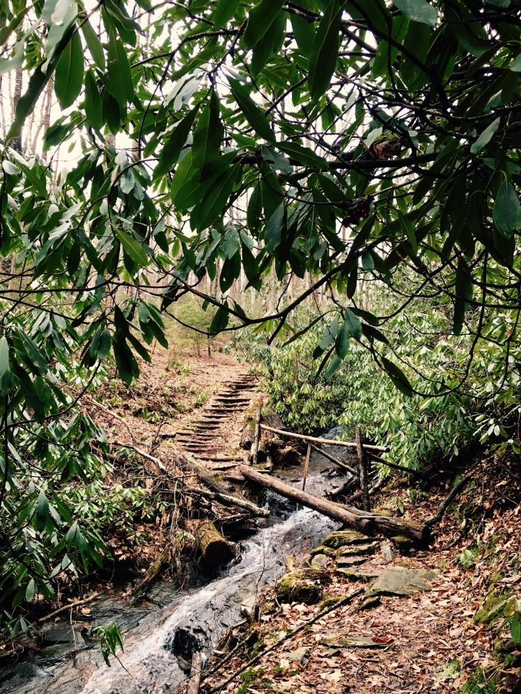 Pressley Cove Trail - bridge