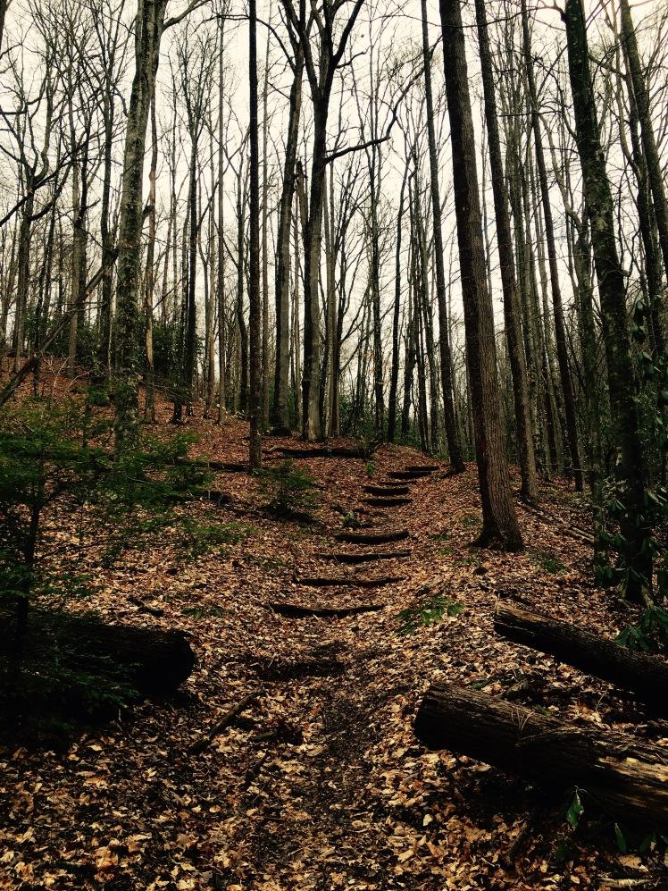 Pressley Cove Trail - trail