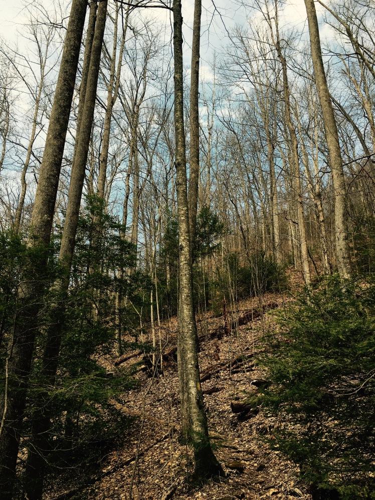 Slick Rock Falls Trail - trees