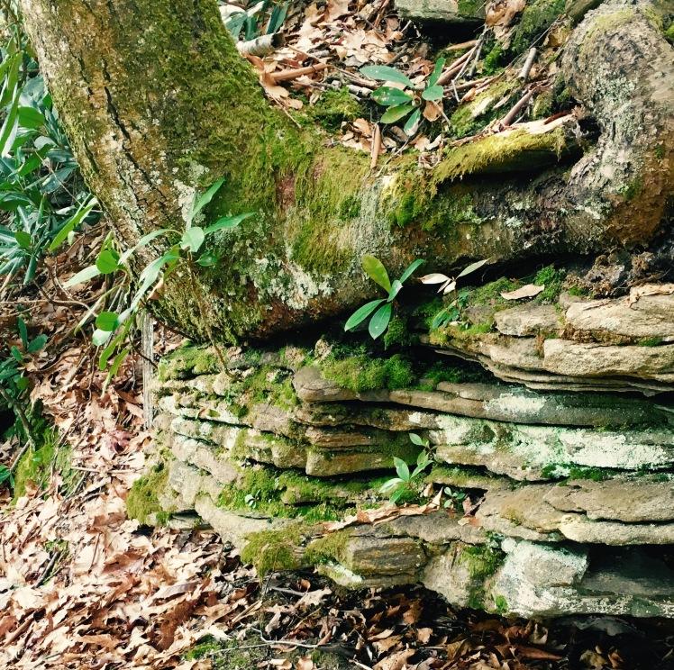 Black Mountain Trail - ancient rock