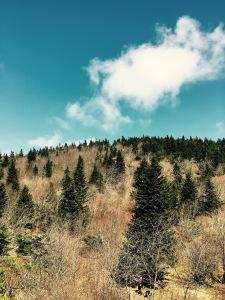 Little Sam Trail - view of Chestnut Bald