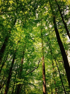 Big Fat Gap Trail - green foliage