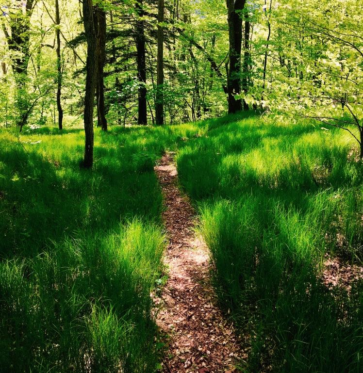 Buckeye Gap Trail - trail