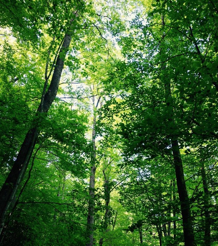 F.S. 47H - trees