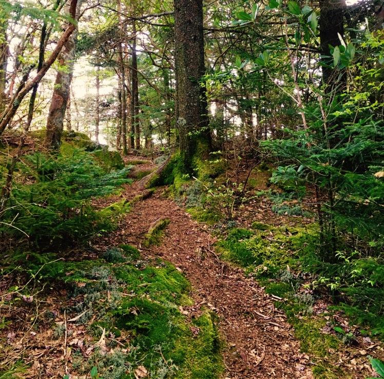 Green Mountain Trail - trail