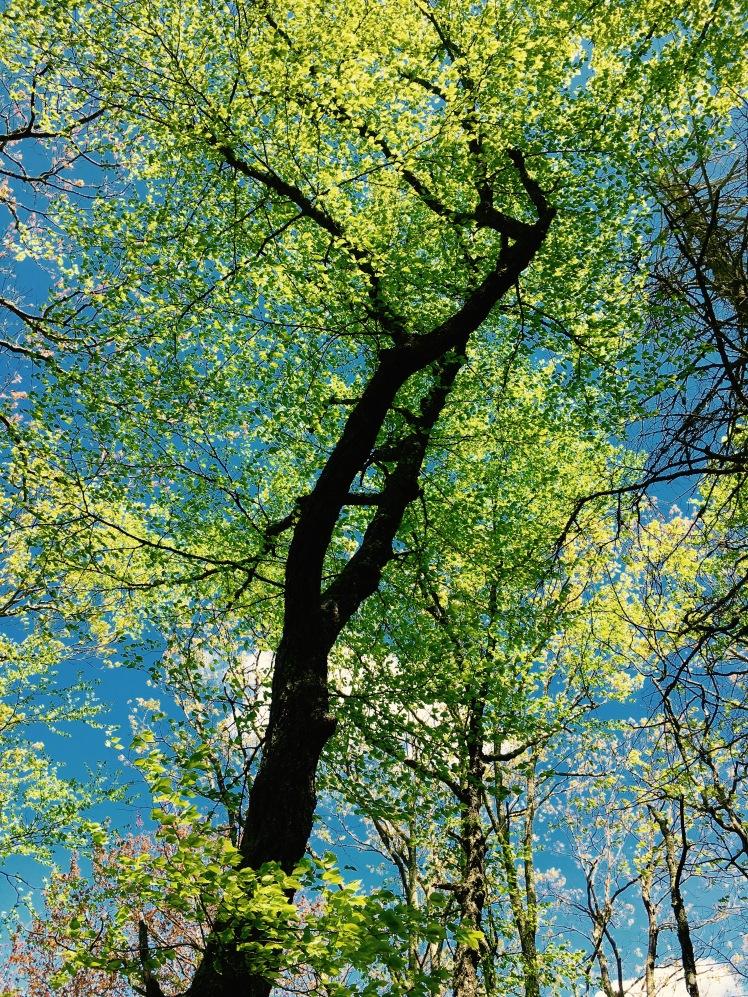 Green Mountain Trail - trees