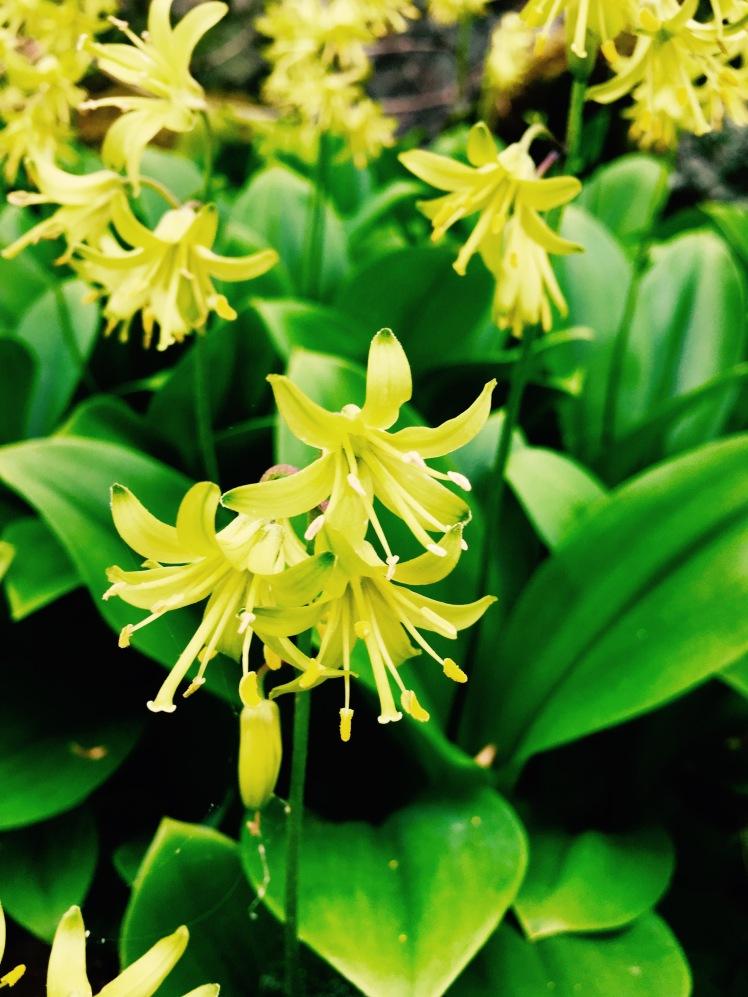 Mt. Pisgah Trail - flowers