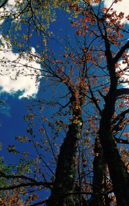 Mt. Pisgah Trail - trees