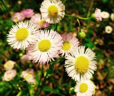 Pink Beds Loop Trail - flowers