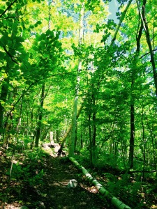 Appalachian Trail to Vermont State Line