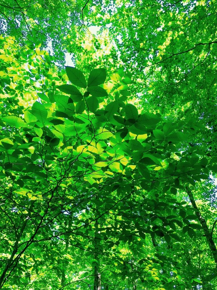 Glastenbury Wildnerness - foliage