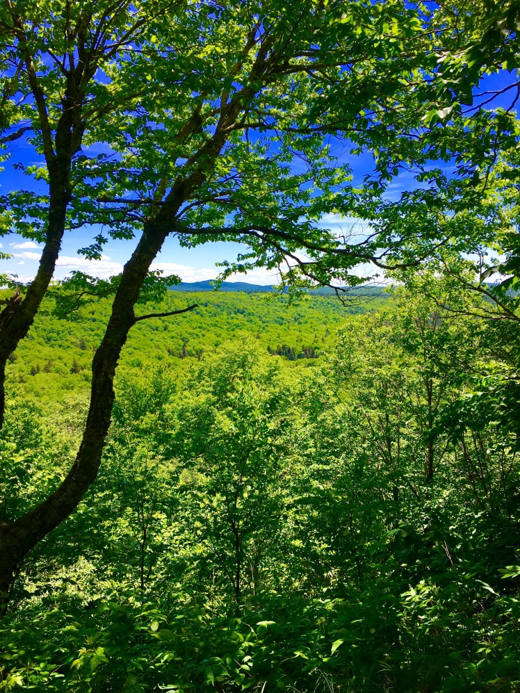Glastenbury Wildnerness - view