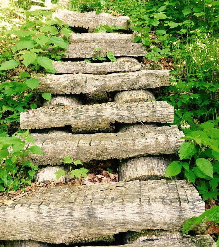 Long Trail - steps