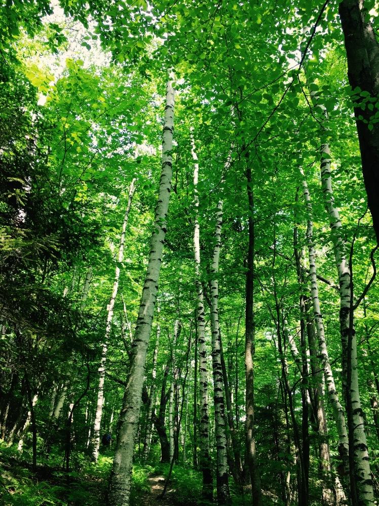 Long Trail - trees