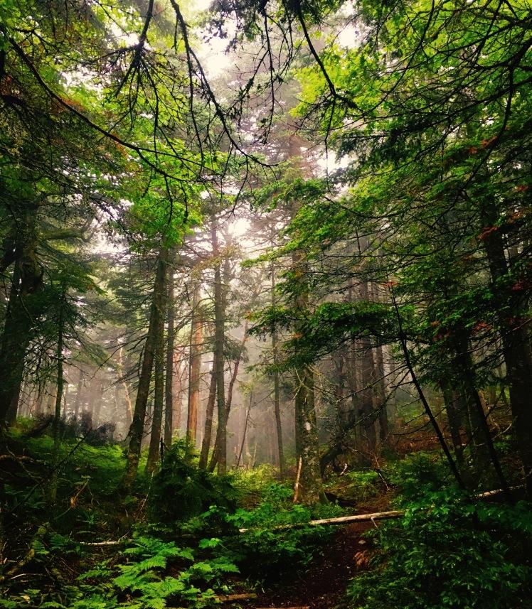 mist - Killington Mountain