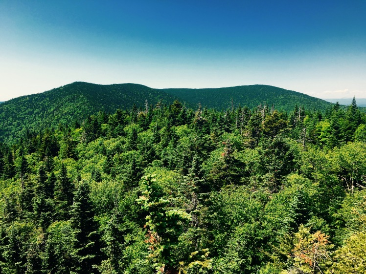Mt. Roosevelt view