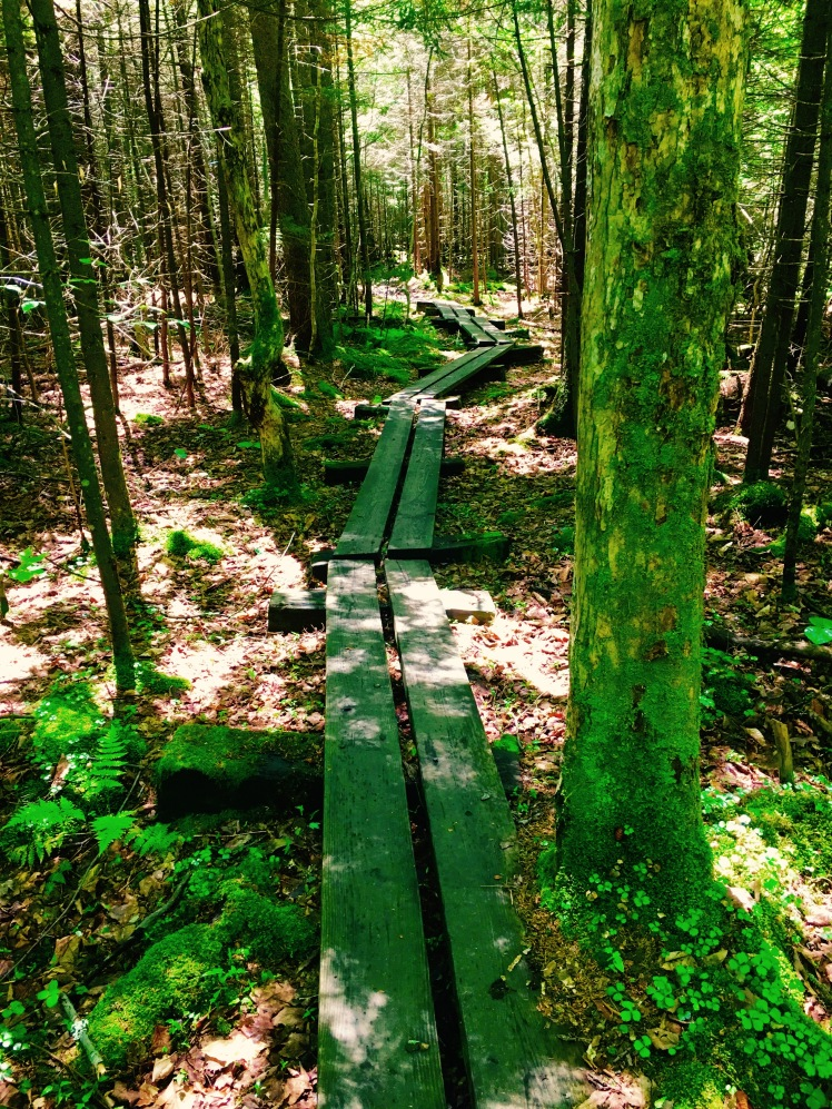 planks on Long Trail