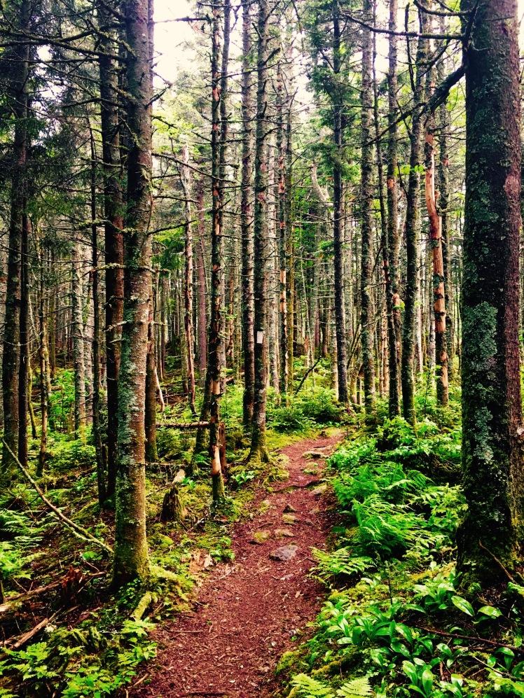 trail - Killington Mountain